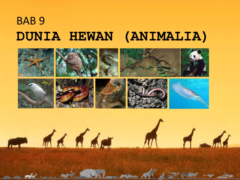 Nemathelminthes hewan Kingdom Animalia: Phylum Nematoda and Phylum Annelida fereg a belben