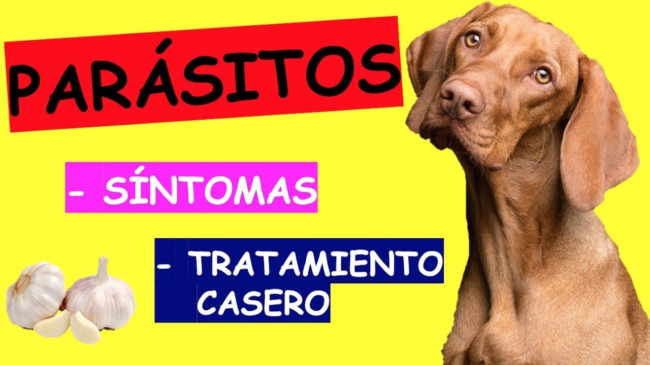 oxiuros tratamiento perros