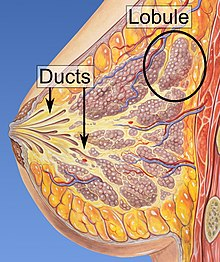 Squamous cell papilloma in urdu, Papilloma meaning urdu. TRIMITE UN COMENTARIU