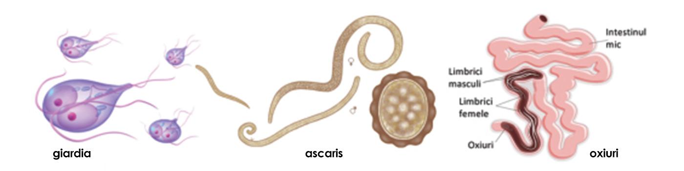 parazitii giardia cancer vezica urinara g3