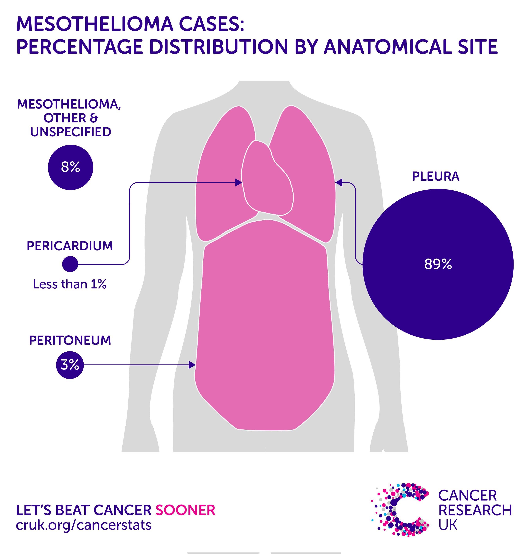 peritoneal cancer incidence vierme de vârf și vierme de roată