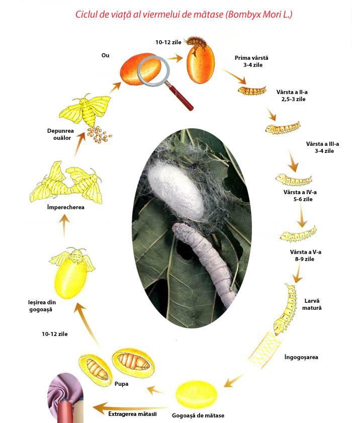 pregătirea eficientă a viermei pentru viermi