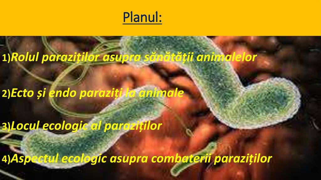 probleme parazitare
