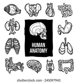 schita nematodului uman infecție helmint ppt