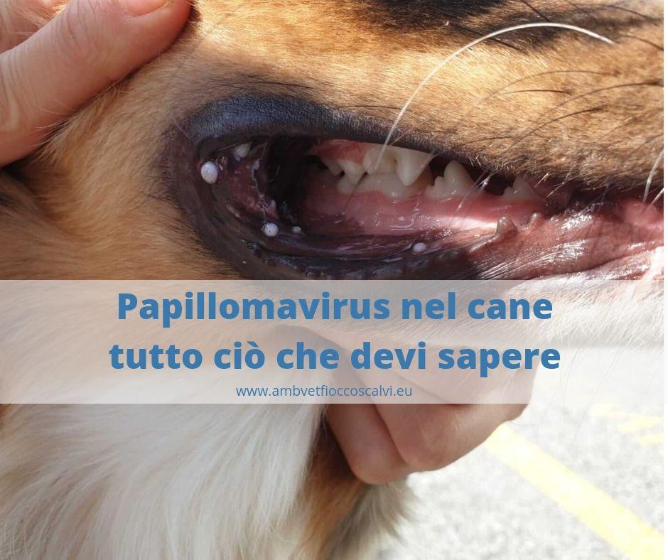 Papilloma virus palato sintomi, Posts navigation