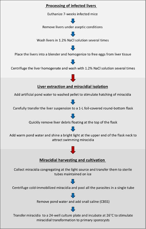 stadiile de tratament ale giardiozei