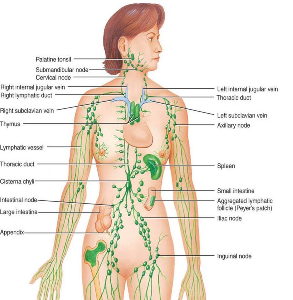 tratament detoxifiere limfatica
