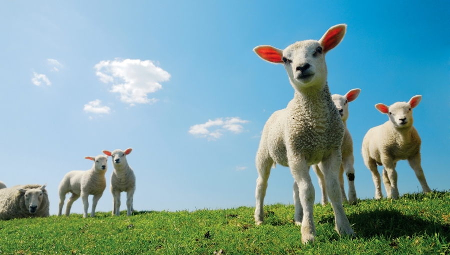 tratarea viermilor la ciobani proprietăți ale platyhelminthes planaria
