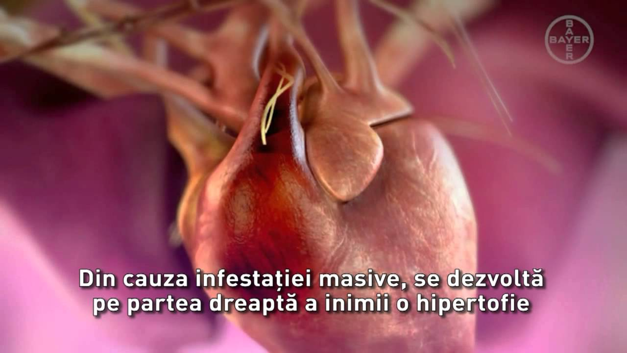 cancerul se transmite pe cale sexuala hpv herpes simplex 1
