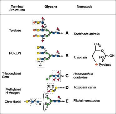 giardia azitromicinei