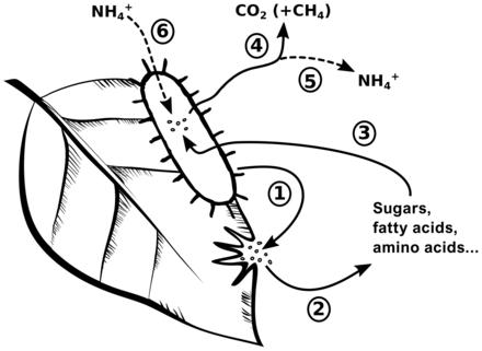 paraziti kako ih se rijesiti hpv symptoms of cancer