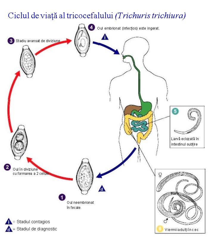 ciclul de viață al biciului endometrial cancer symptoms patient stories
