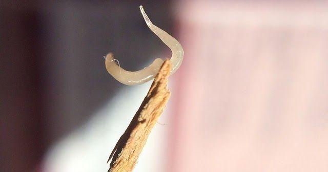 human papilloma nedir