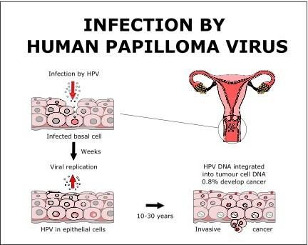 how is human papillomavirus hpv transmitted