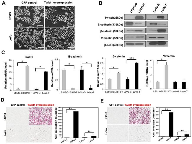 cancer colon mss virus del papiloma garganta